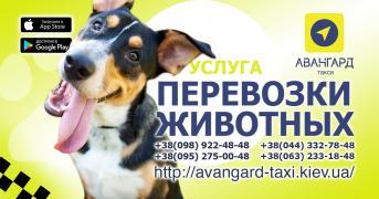 """""""Авангард"""". Таксі в Києві"""