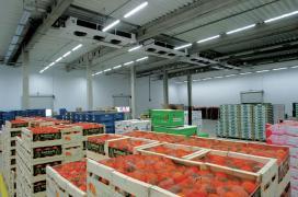 Vegetable storage. Refrigerators and freezers